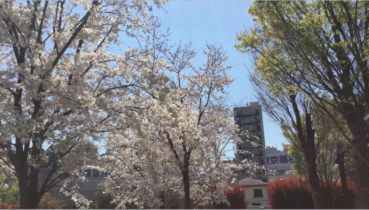 南池袋公園 桜