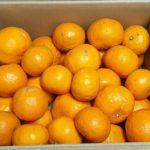 カラマンダリンオレンジ
