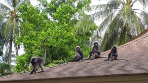 ラヤバディ RAYAVADEE 猿