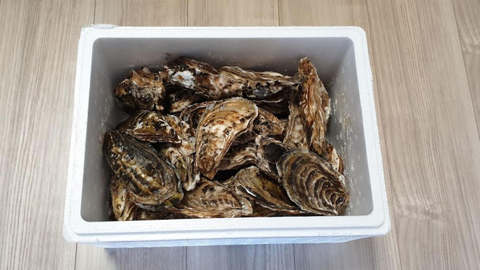 海のミルクサロマ湖産殻付2年物カキ貝