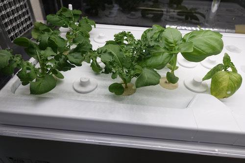 グリーンファームのお試しキットです。レタスの種まきをしてみました。